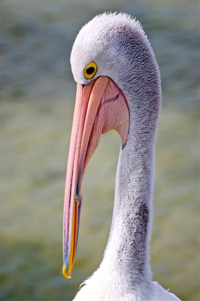 That Beak