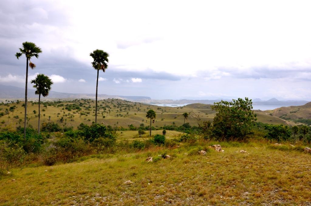 Komodo Island's Jurasic Park landscape